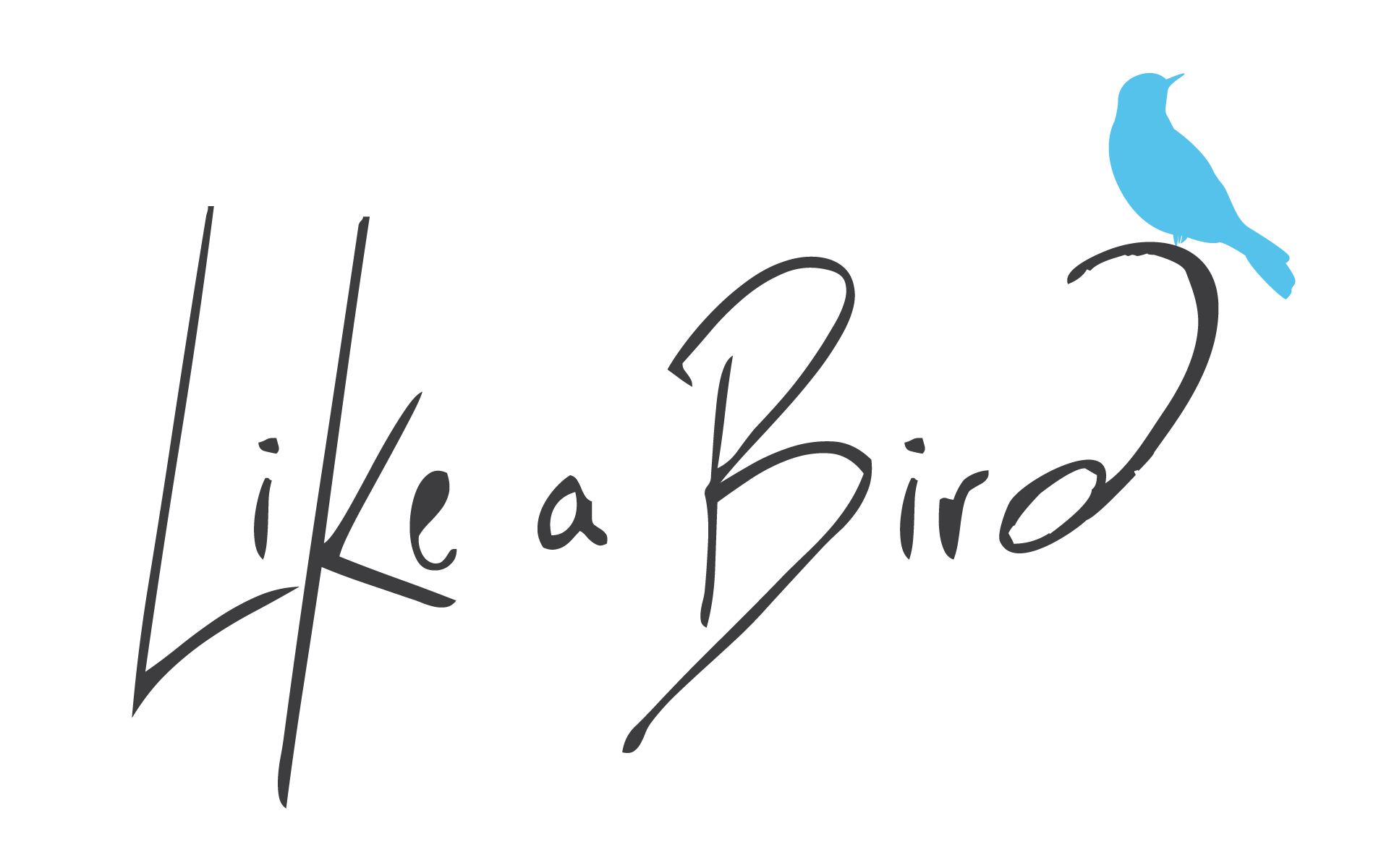 french startup like a bird simplicity and interactivity for campaigns